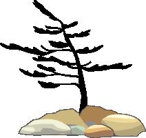 Windy Pine 1